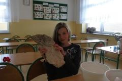 Kółko geograficzne - skały klasa 5