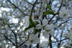 Zdjęcia Amelii Cz. z klasy VI - Wiosenny Konkurs Fotograficzny